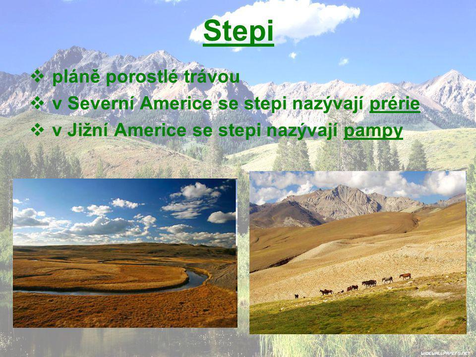 Stepi pláně porostlé trávou v Severní Americe se stepi nazývají prérie