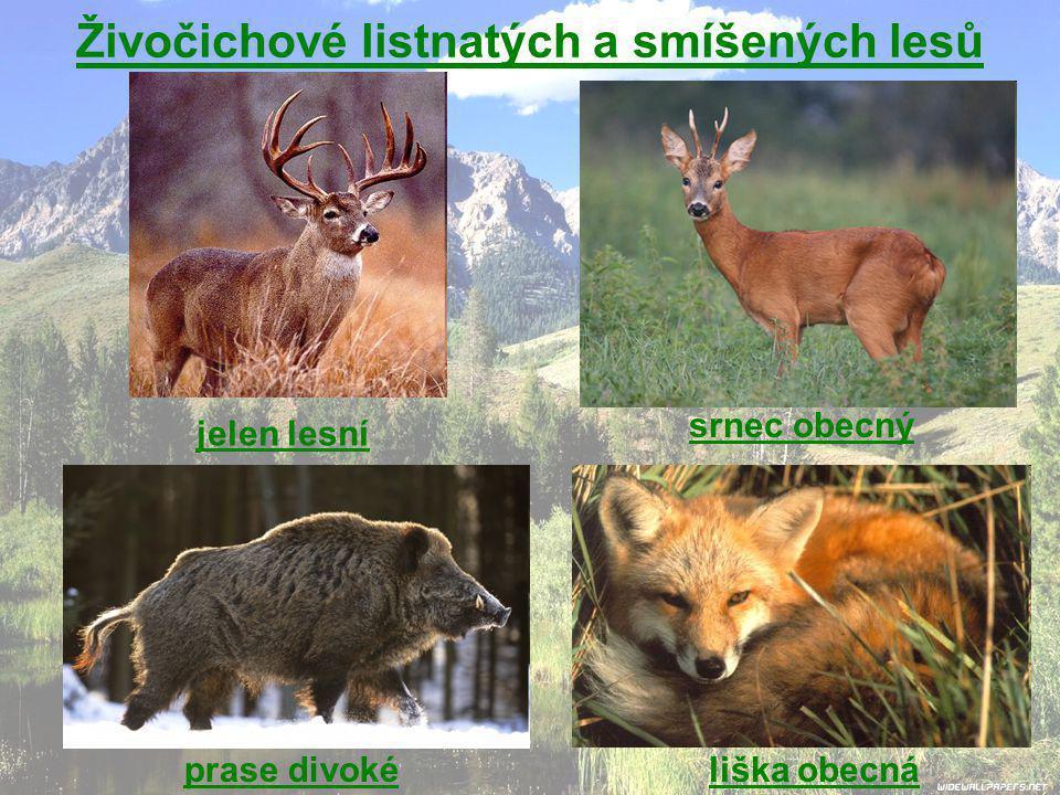 Živočichové listnatých a smíšených lesů