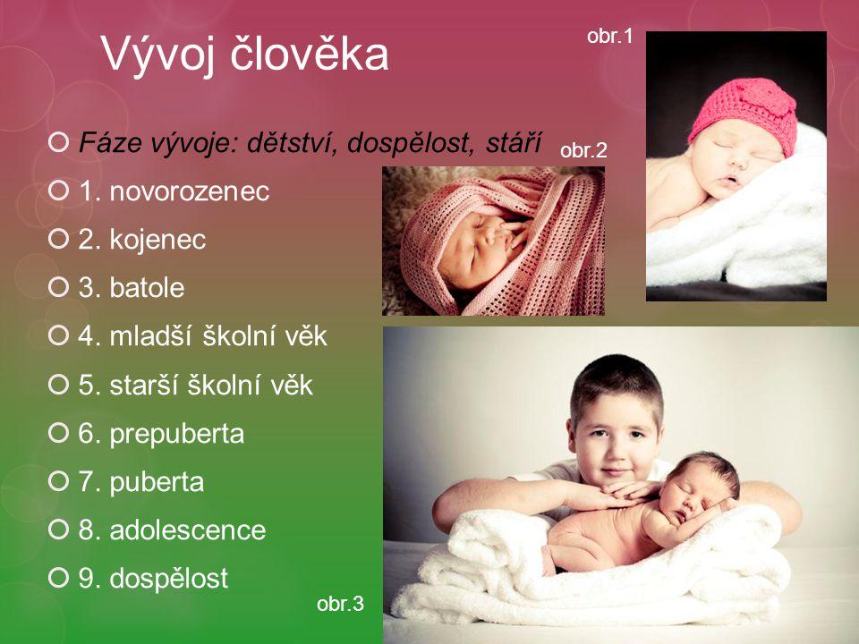 Vývoj člověka Fáze vývoje: dětství, dospělost, stáří 1. novorozenec