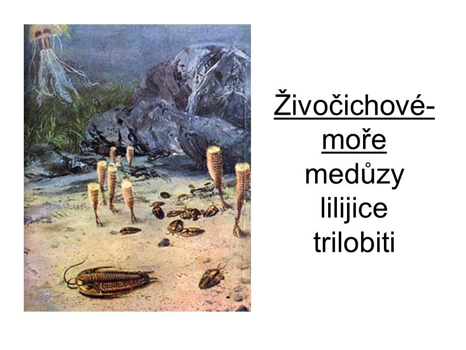 Živočichové-moře medůzy lilijice trilobiti
