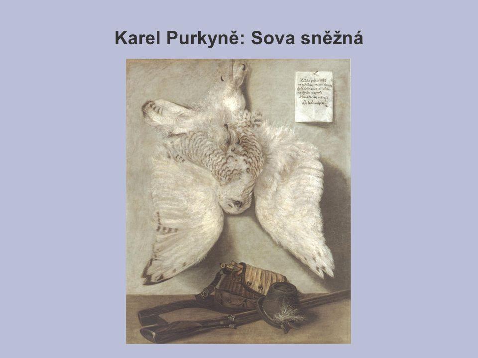 Karel Purkyně: Sova sněžná
