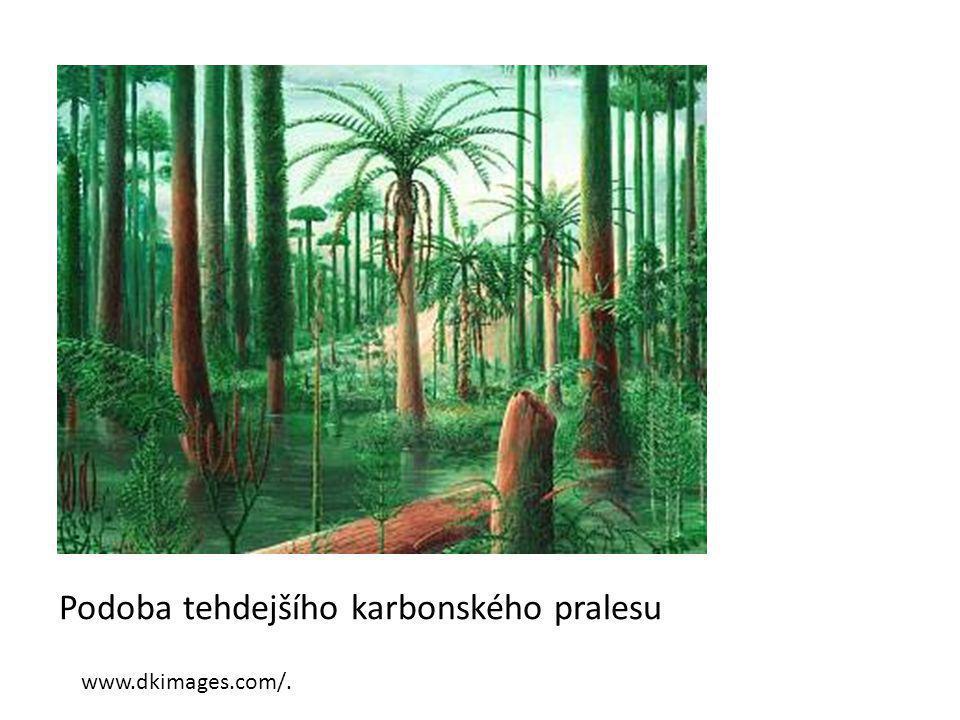 Podoba tehdejšího karbonského pralesu