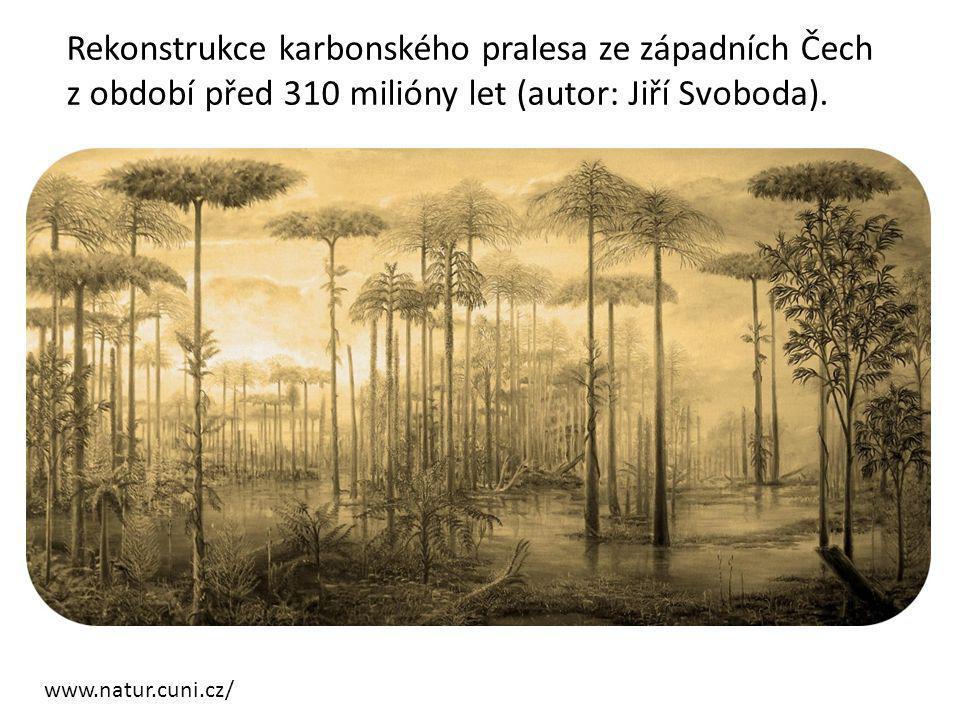 Rekonstrukce karbonského pralesa ze západních Čech z období před 310 milióny let (autor: Jiří Svoboda).