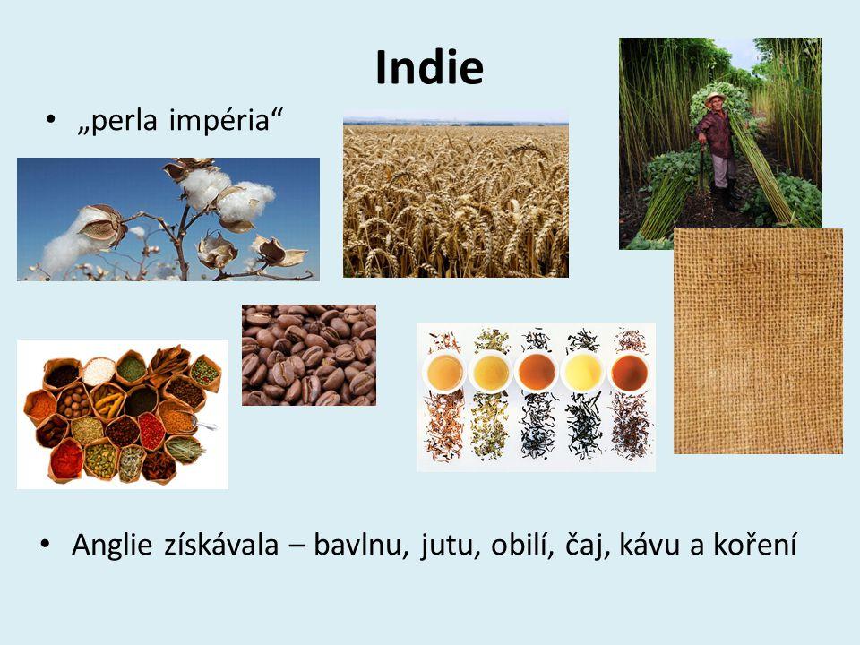 """Indie """"perla impéria Anglie získávala – bavlnu, jutu, obilí, čaj, kávu a koření"""