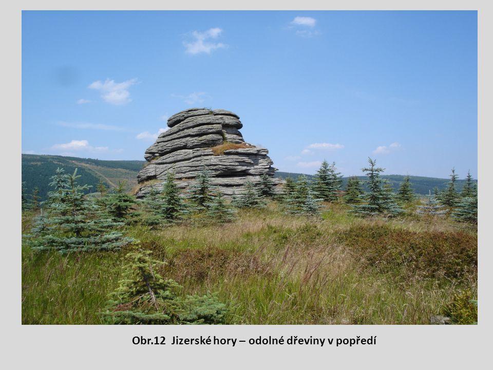 Obr.12 Jizerské hory – odolné dřeviny v popředí