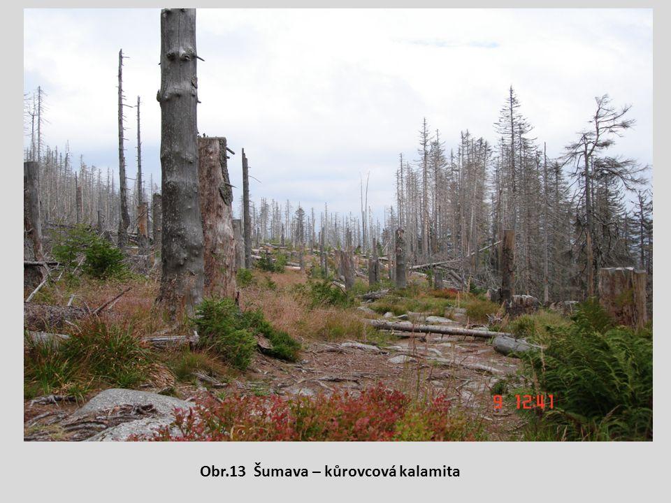 Obr.13 Šumava – kůrovcová kalamita