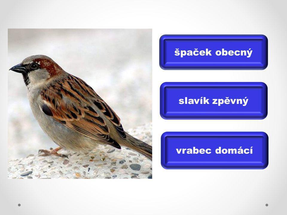 špaček obecný slavík zpěvný vrabec domácí