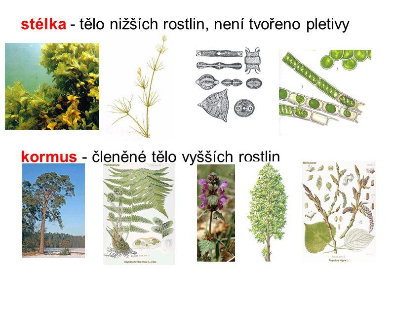 stélka - tělo nižších rostlin, není tvořeno pletivy