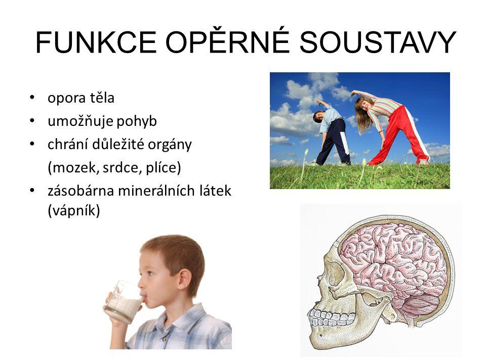 FUNKCE OPĚRNÉ SOUSTAVY