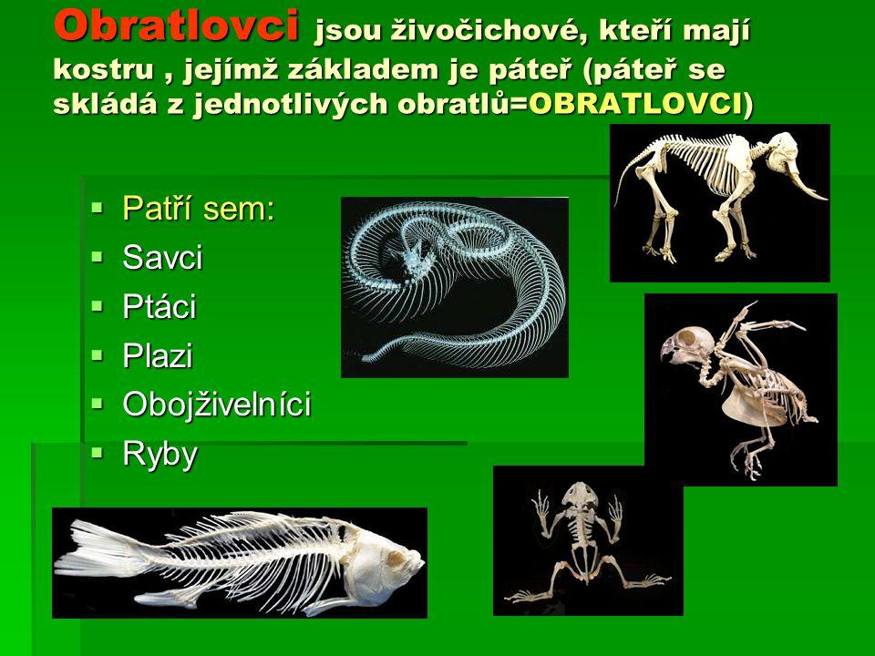 Obratlovci jsou živočichové, kteří mají kostru , jejímž základem je páteř (páteř se skládá z jednotlivých obratlů=OBRATLOVCI)