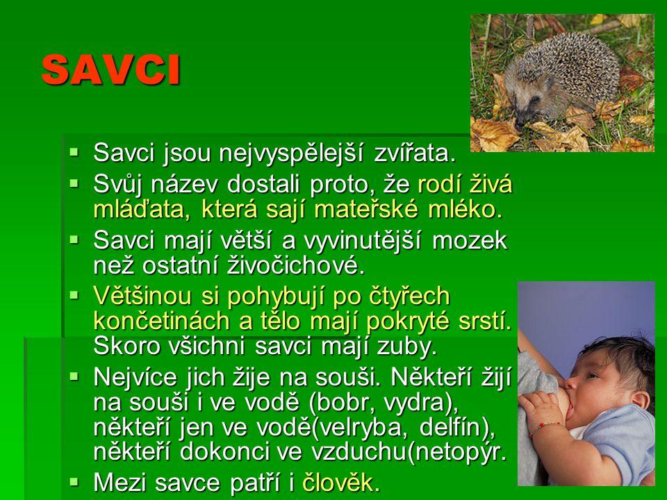 SAVCI Savci jsou nejvyspělejší zvířata.