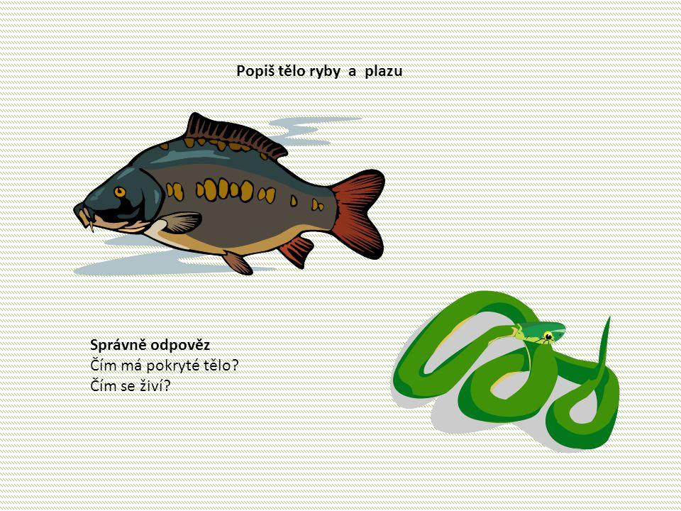 Popiš tělo ryby a plazu Správně odpověz Čím má pokryté tělo Čím se živí