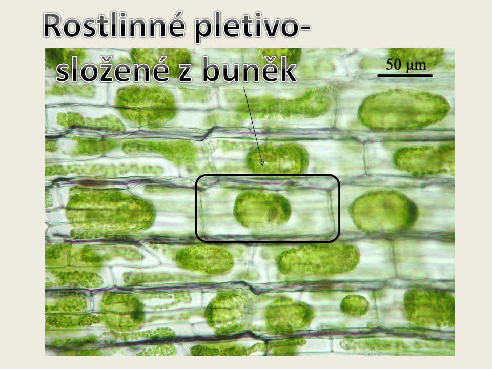 Rostlinné pletivo- složené z buněk