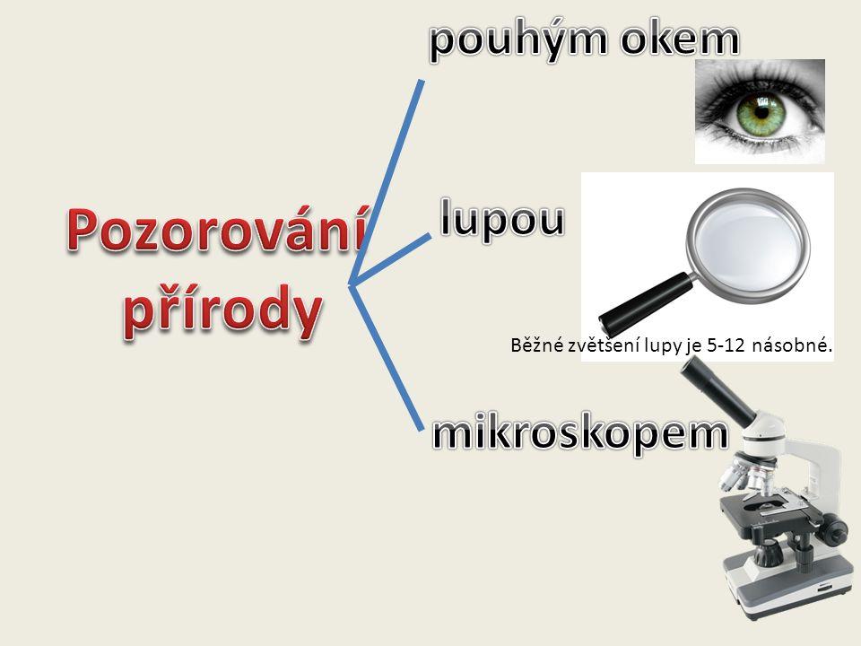 Pozorování přírody pouhým okem lupou mikroskopem