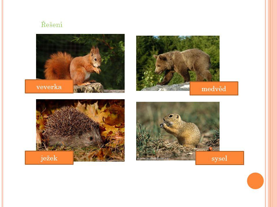 Řešení veverka medvěd ježek sysel