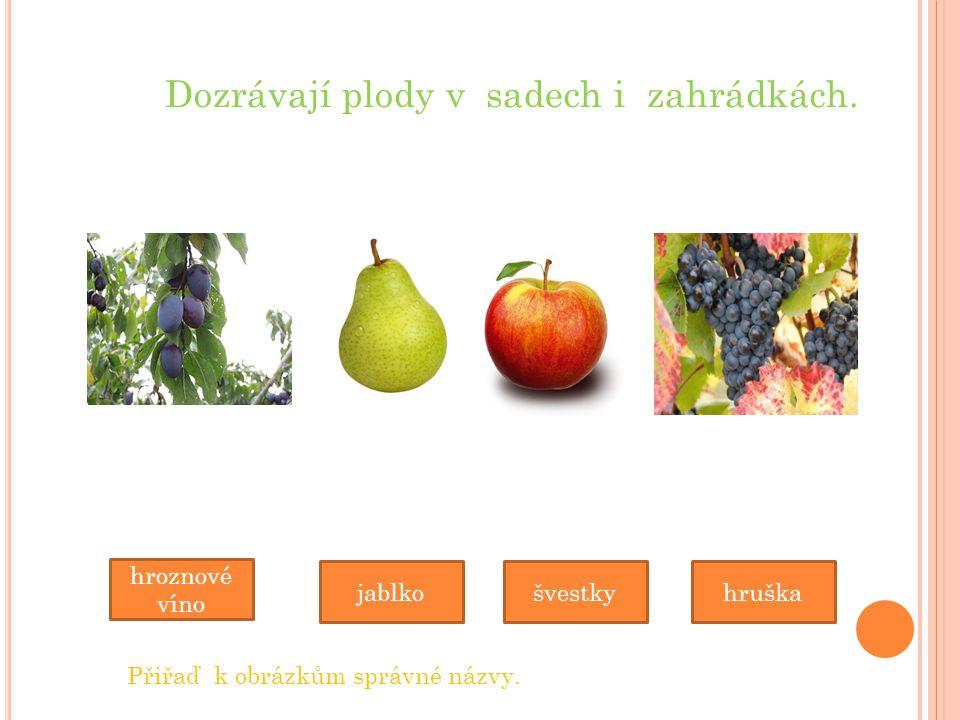 Dozrávají plody v sadech i zahrádkách.