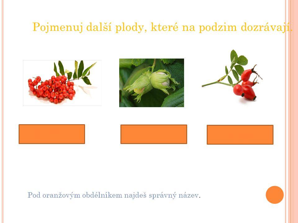 Pojmenuj další plody, které na podzim dozrávají.