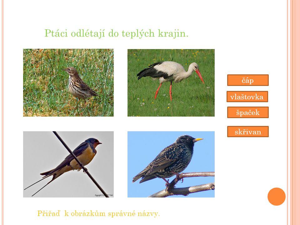 Ptáci odlétají do teplých krajin.