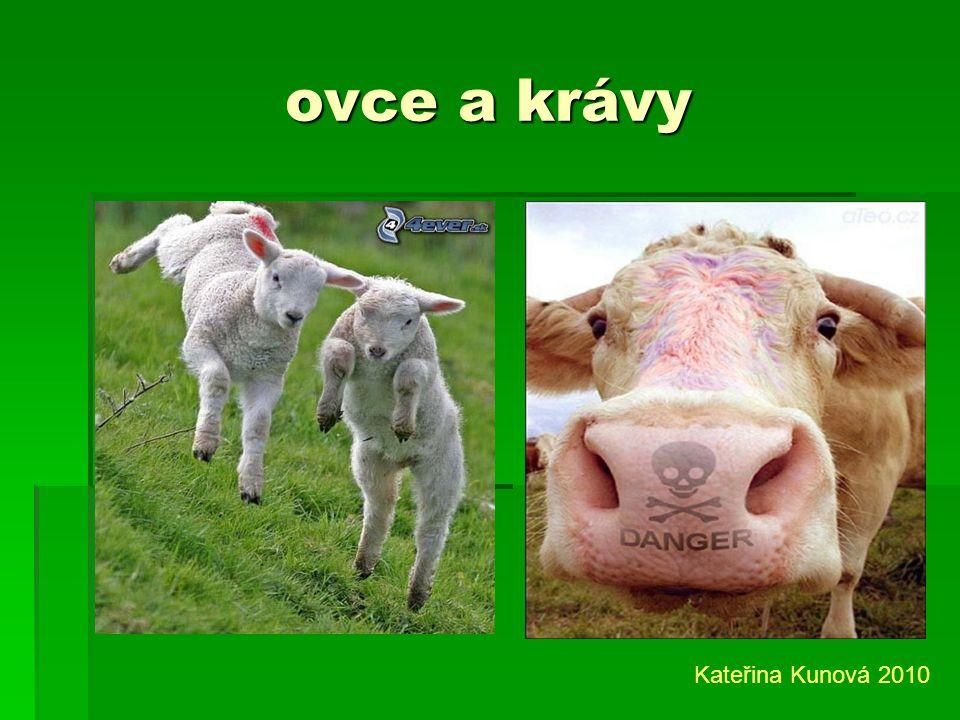 ovce a krávy Kateřina Kunová 2010
