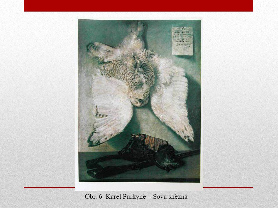 Obr. 6 Karel Purkyně – Sova sněžná