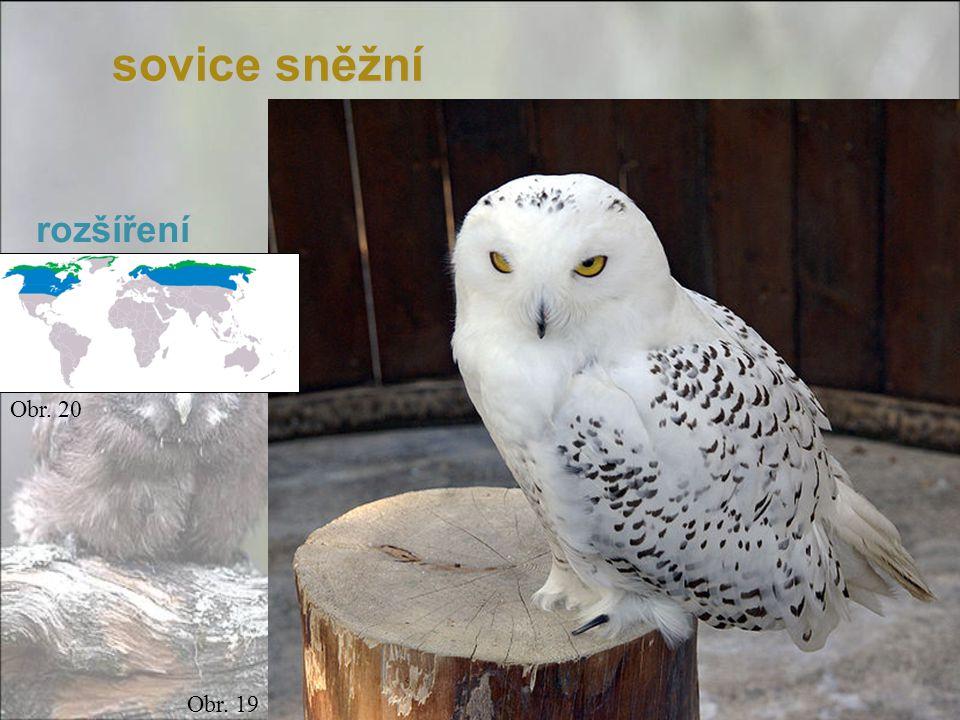 sovice sněžní rozšíření Obr. 20 Obr. 19