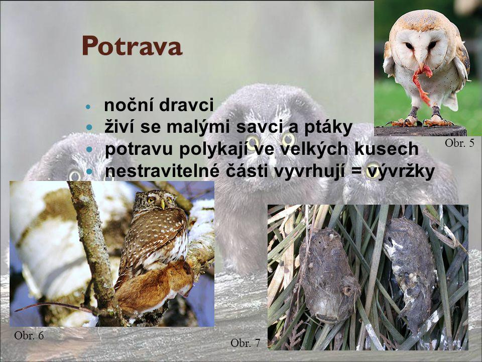 Potrava živí se malými savci a ptáky