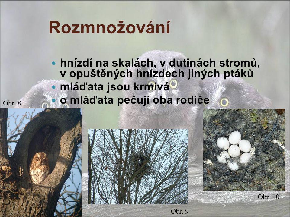Rozmnožování hnízdí na skalách, v dutinách stromů, v opuštěných hnízdech jiných ptáků. mláďata jsou krmivá.