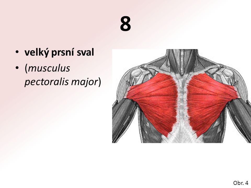 8 velký prsní sval (musculus pectoralis major) Obr. 4