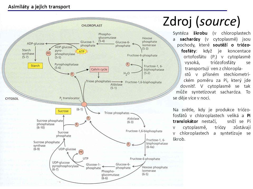 Zdroj (source) Asimiláty a jejich transport