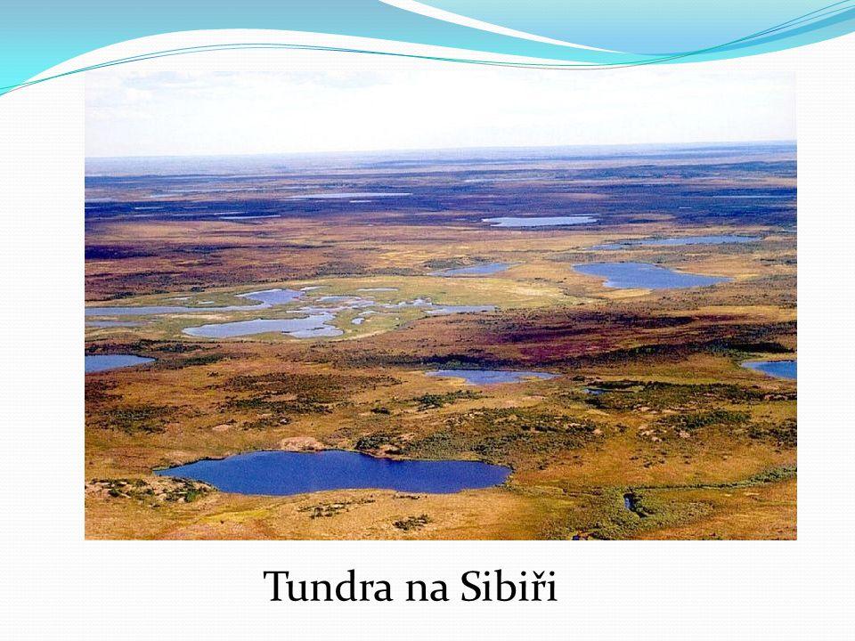 Tundra na Sibiři