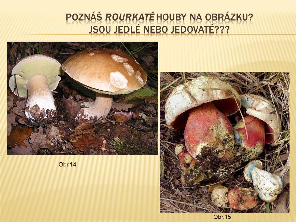 Poznáš rourkaté houby na obrázku Jsou jedlé nebo jedovaté