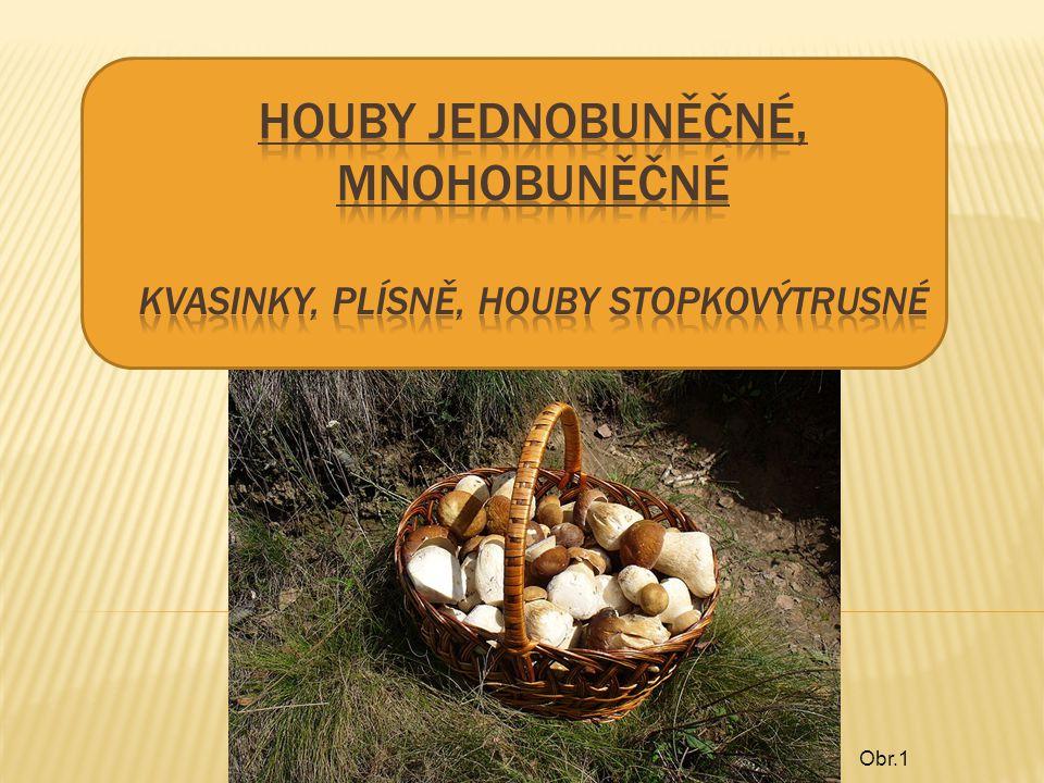 HOUBY jednobuněčné, mnohobuněčné Kvasinky, plísně, houby stopkovýtrusné