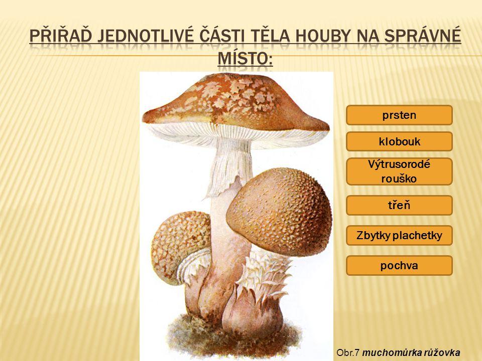 Přiřaď jednotlivé části těla houby na správné místo: