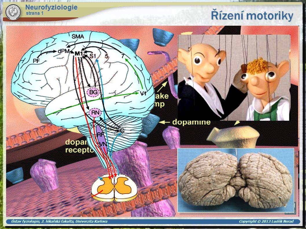 Řízení motoriky Neurofyziologie strana 1
