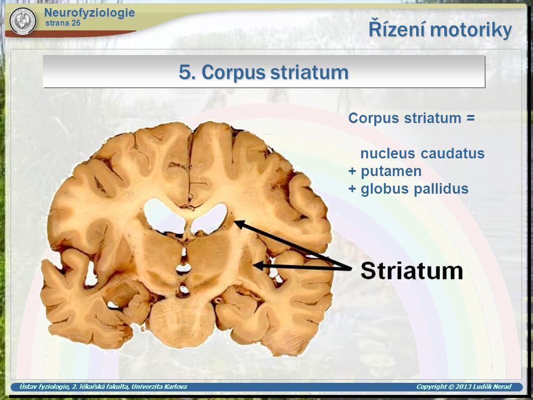 Řízení motoriky 5. Corpus striatum Corpus striatum = nucleus caudatus