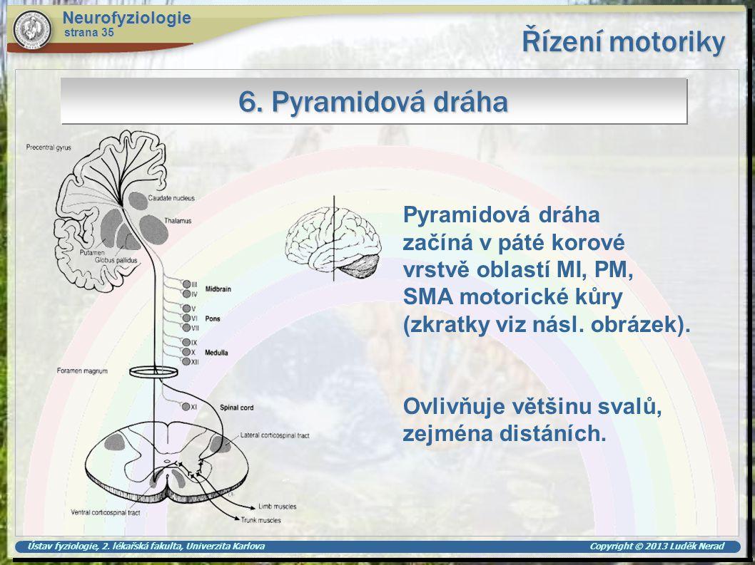 Řízení motoriky 6. Pyramidová dráha Pyramidová dráha