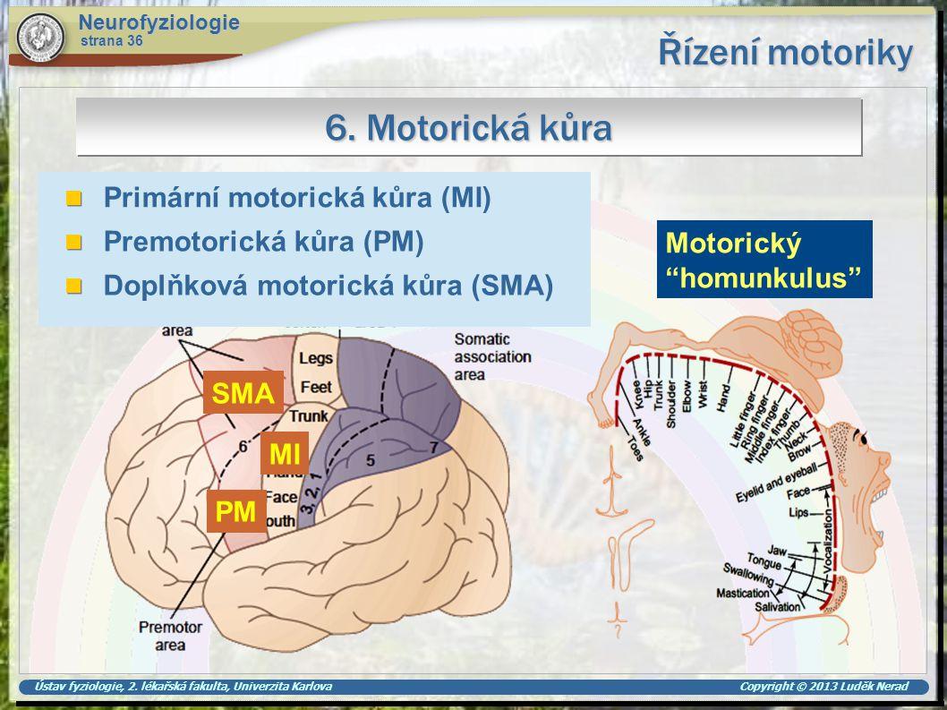 Řízení motoriky 6. Motorická kůra Primární motorická kůra (MI)