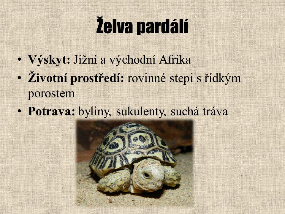 Želva pardálí Výskyt: Jižní a východní Afrika