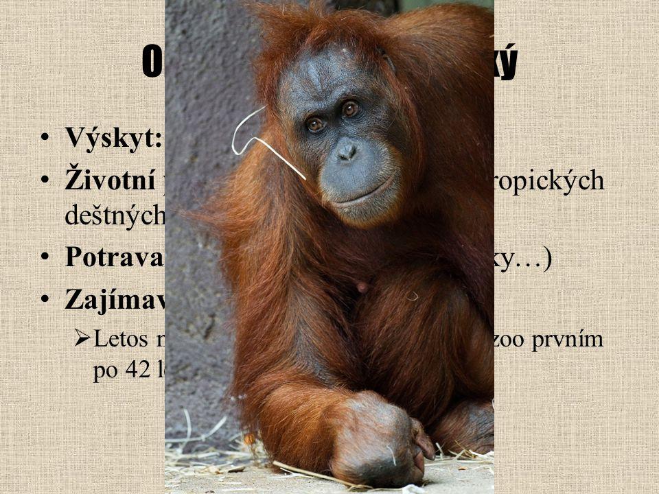 Orangutan sumaterský Výskyt: jihovýchodní Asie
