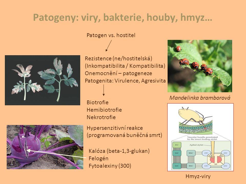 Patogeny: viry, bakterie, houby, hmyz…
