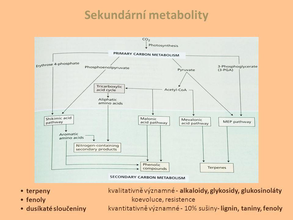 Sekundární metabolity