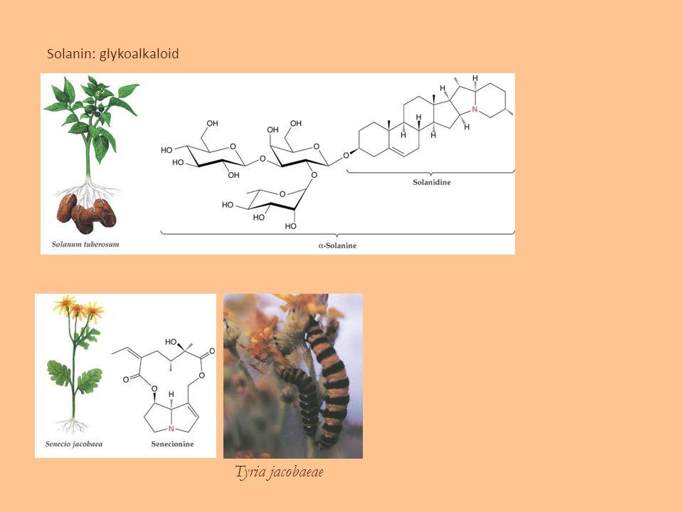Solanin: glykoalkaloid