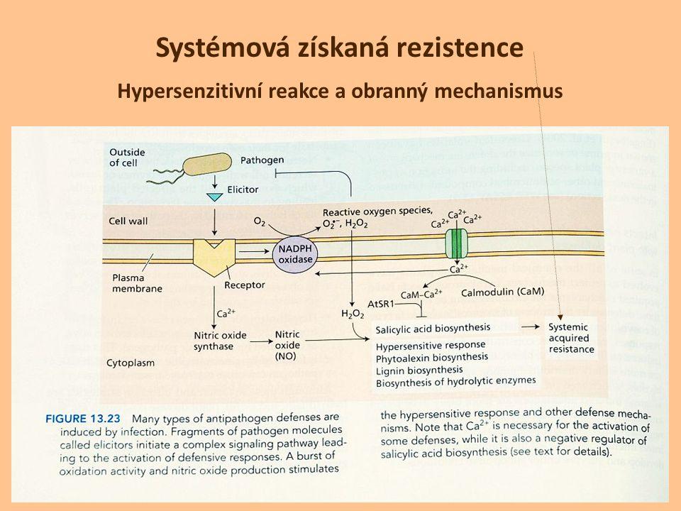 Hypersenzitivní reakce a obranný mechanismus