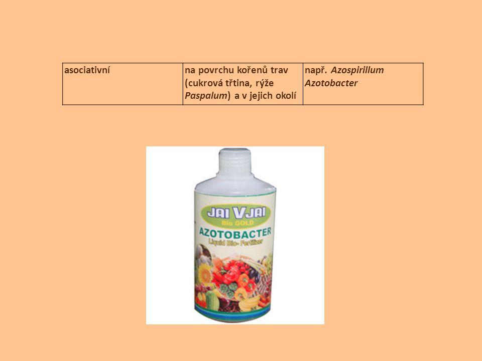asociativní na povrchu kořenů trav (cukrová třtina, rýže Paspalum) a v jejich okolí.