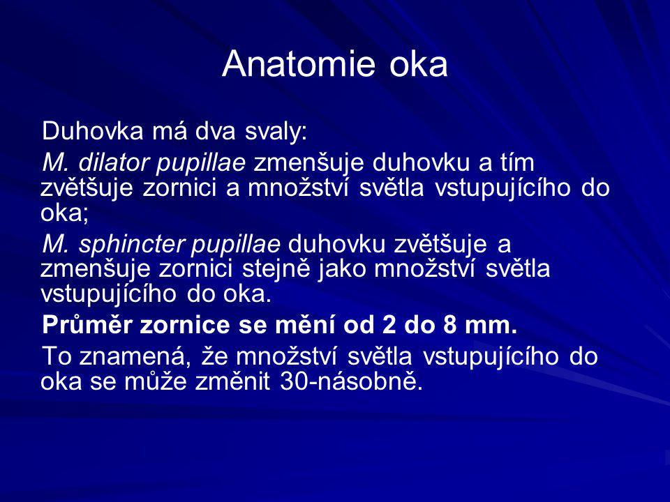 Anatomie oka Duhovka má dva svaly: