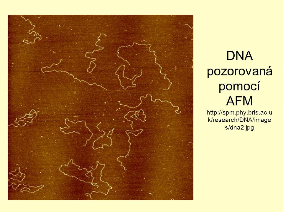 DNA pozorovaná pomocí AFM http://spm. phy. bris. ac
