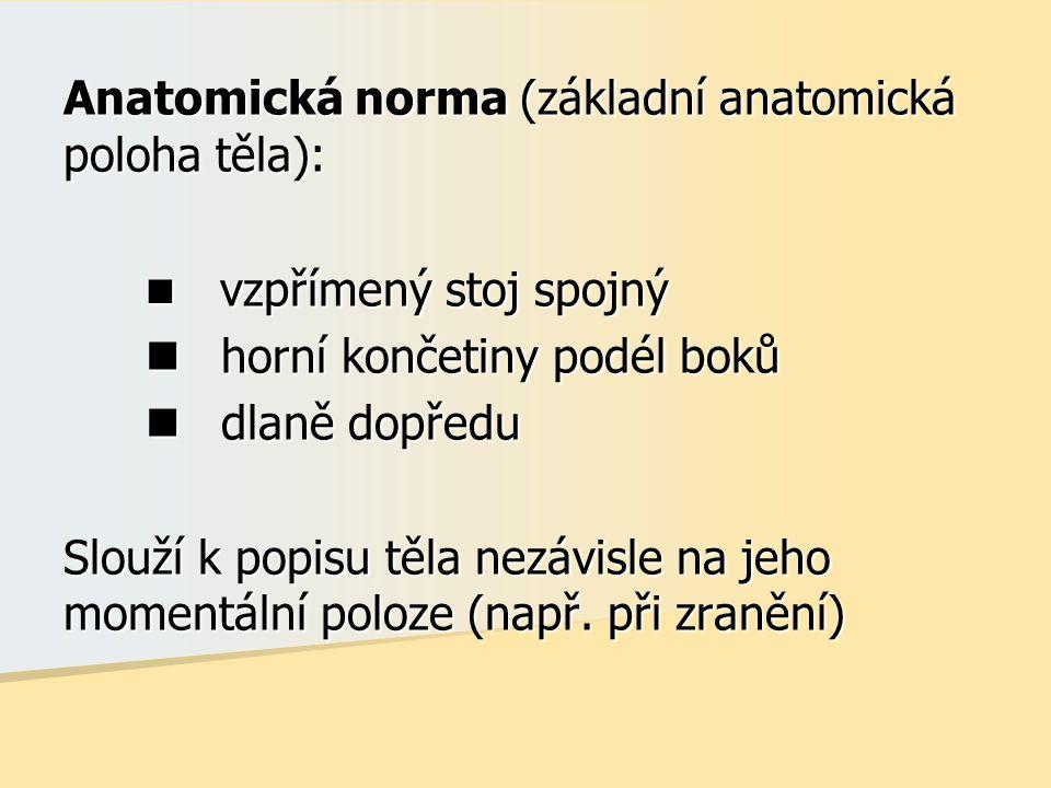 Anatomická norma (základní anatomická poloha těla):