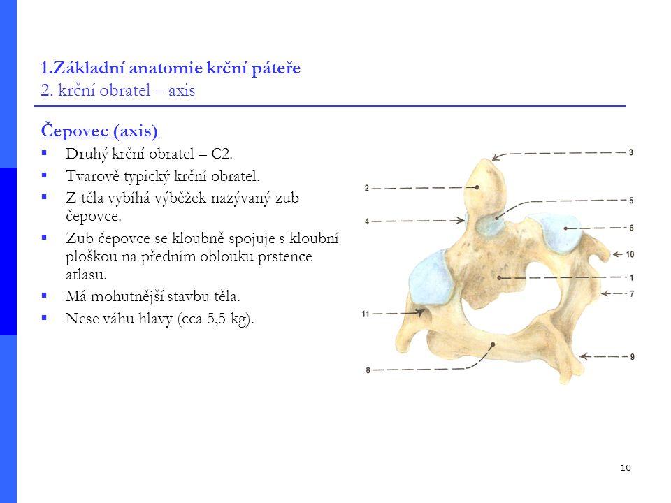 1.Základní anatomie krční páteře 2. krční obratel – axis