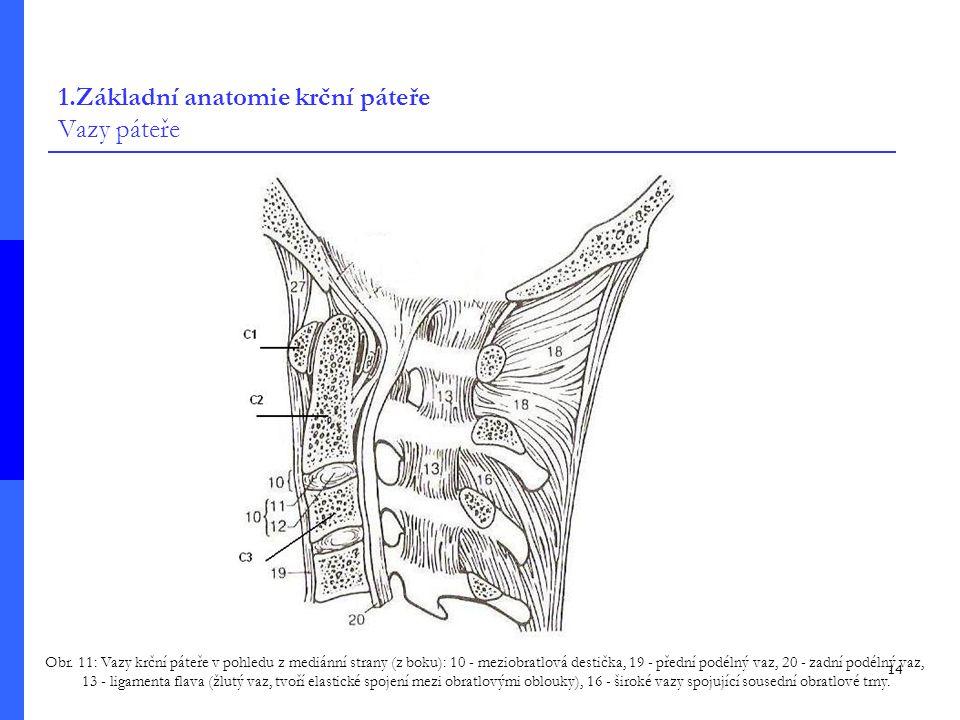 1.Základní anatomie krční páteře Vazy páteře