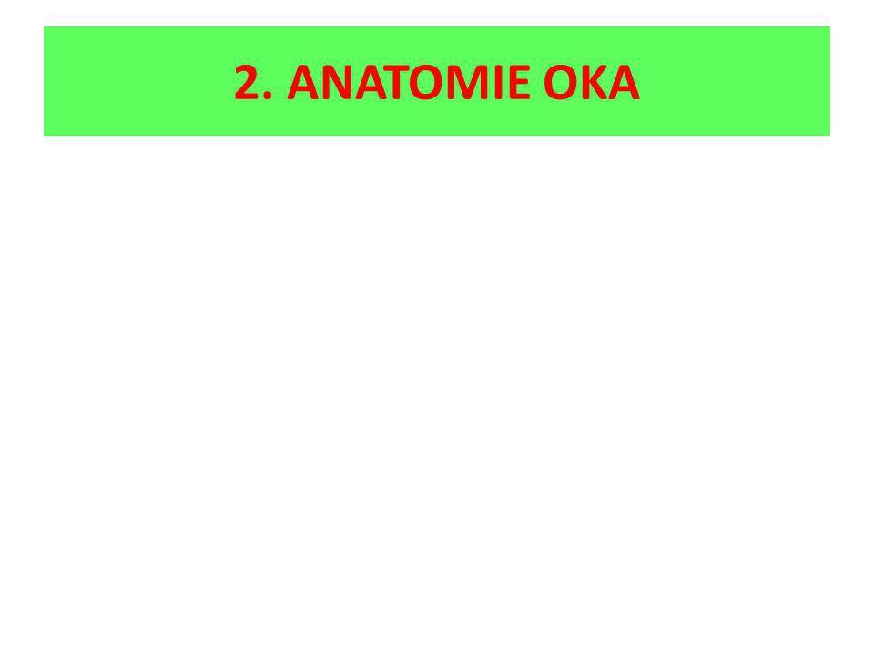 2. ANATOMIE OKA